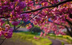 spring-nature-images-nature-walk-spring-season-3840x2400-hd-wallpaper-free-downloads.jpg